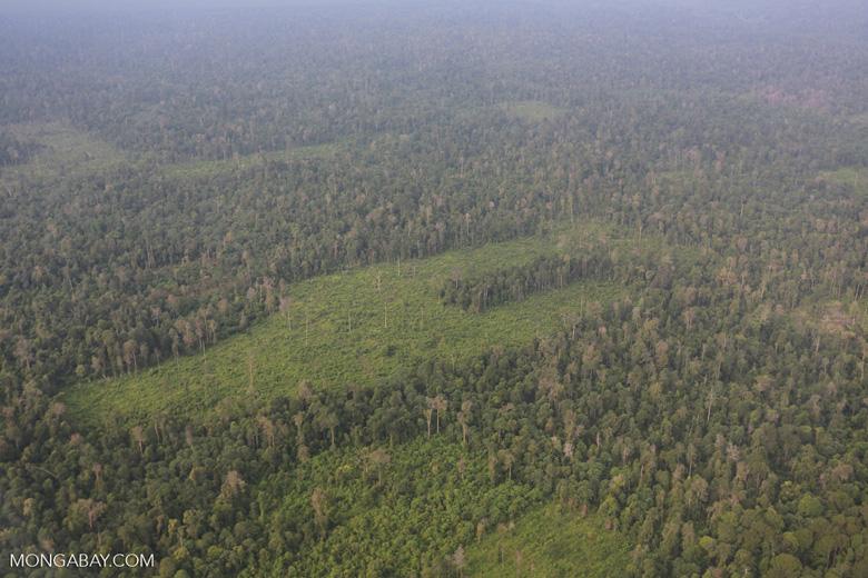 Deforestation in Riau [riau_1228]