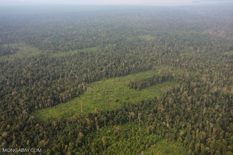 Deforestation in Riau [riau_1229]