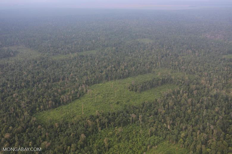 Deforestation in Riau [riau_1230]