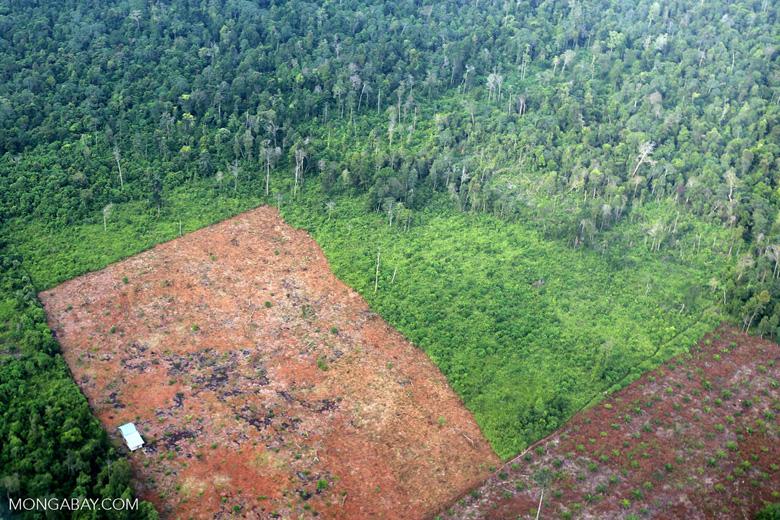 Deforestation in Riau [riau_1232]