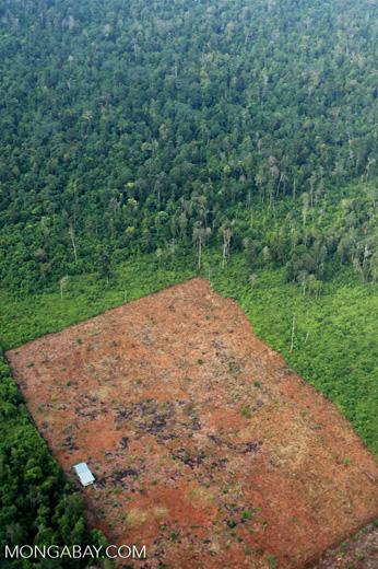 Deforestation in Riau [riau_1233]
