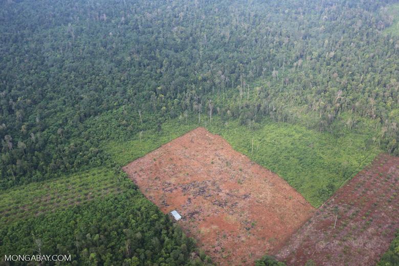 Deforestation in Riau [riau_1240]