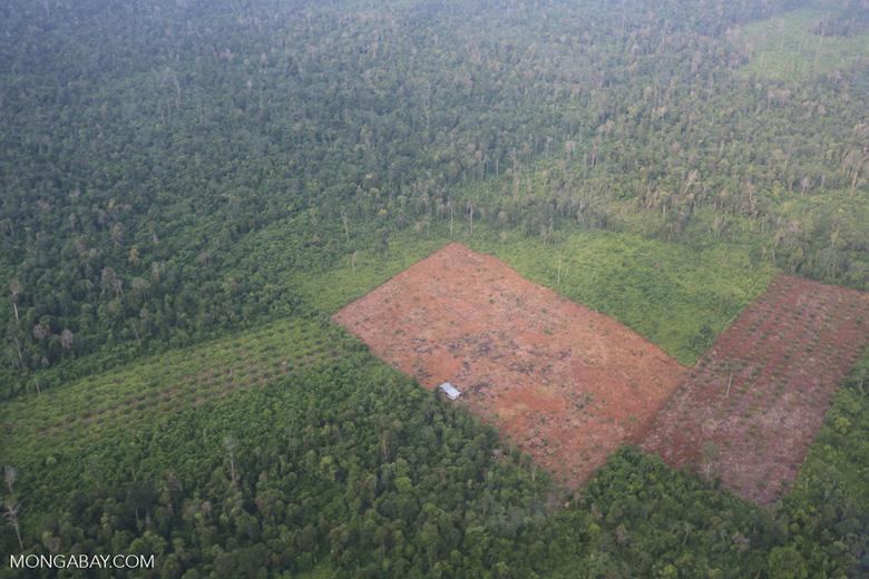 Deforestation in Riau [riau_1241]