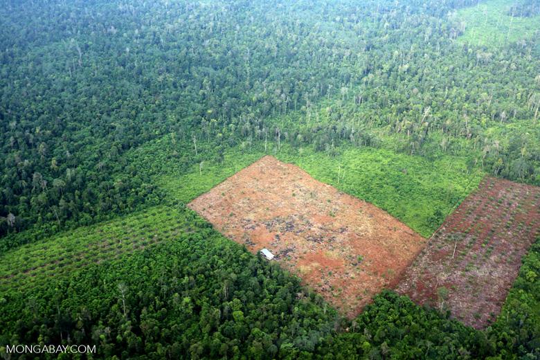 Deforestation in Riau [riau_1242]