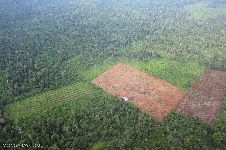 Deforestation in Riau [riau_1243]