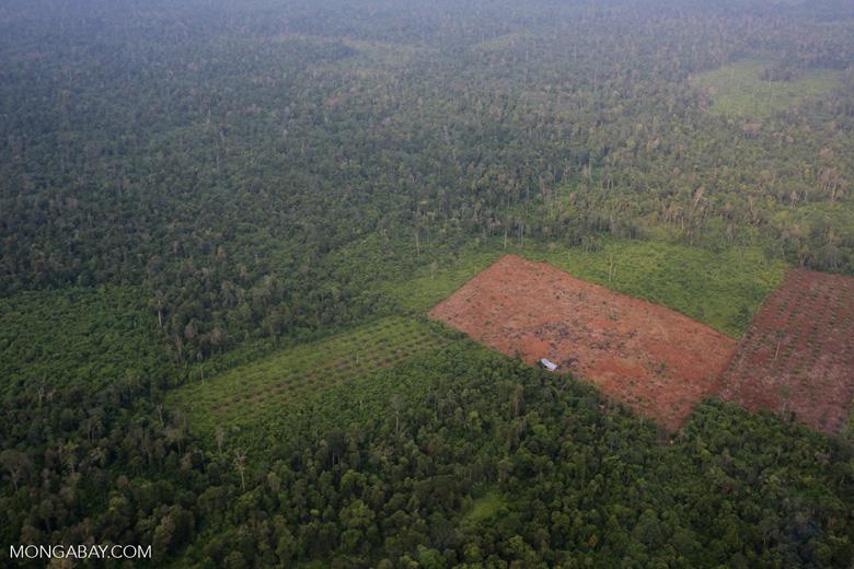 Deforestation in Riau [riau_1244]