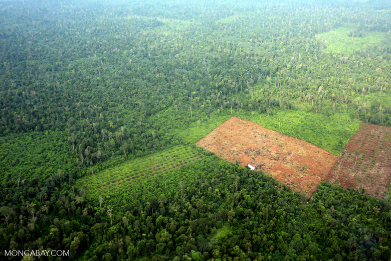 Deforestation in Riau [riau_1245]