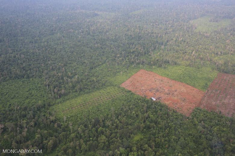 Deforestation in Riau [riau_1246]