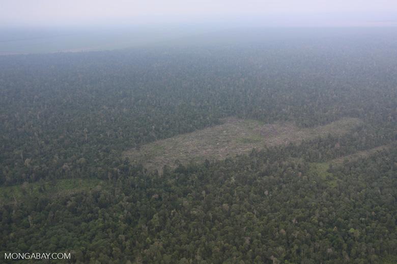 Deforestation in Riau [riau_1247]