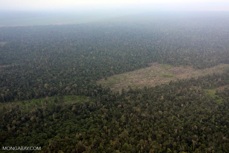 Deforestation in Riau [riau_1248]