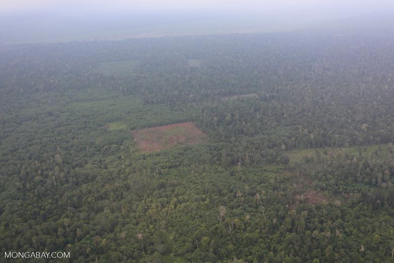 Deforestation in Riau [riau_1249]