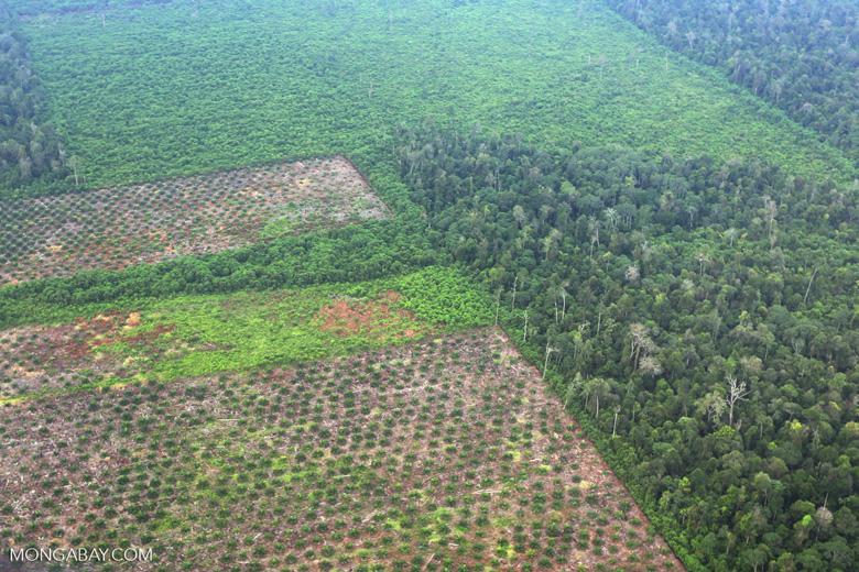 Deforestation in Riau [riau_1252]