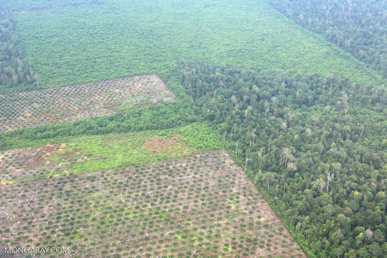 Deforestation in Riau [riau_1253]