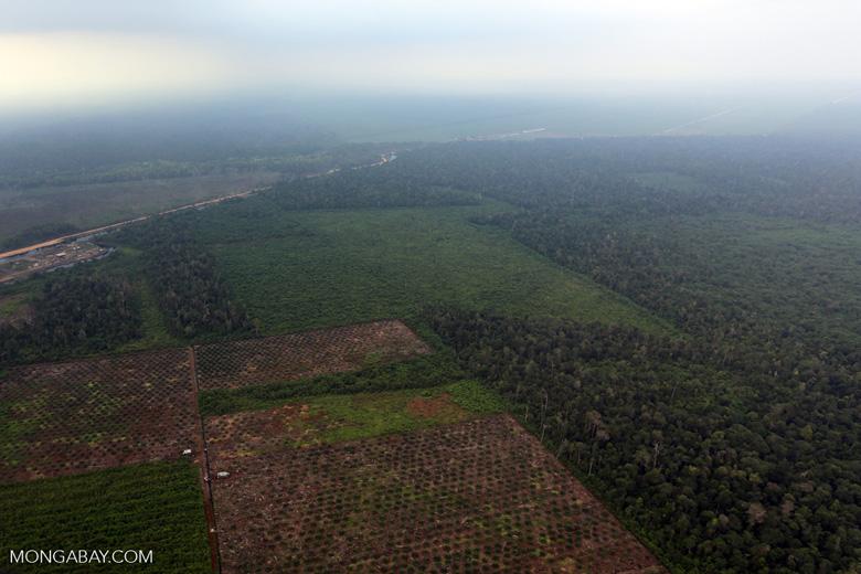 Deforestation in Riau [riau_1254]