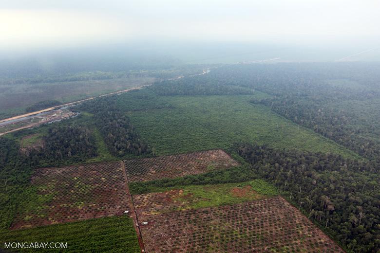 Deforestation in Riau [riau_1255]