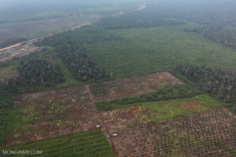 Deforestation in Riau [riau_1256]
