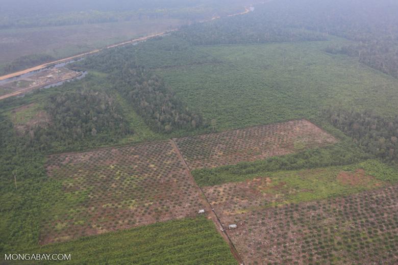 Deforestation in Riau [riau_1257]