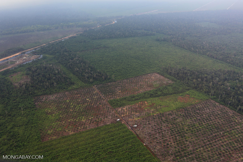 Deforestation in Riau [riau_1258]