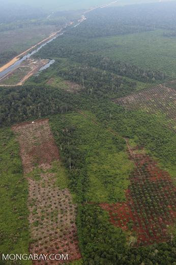 Deforestation in Riau [riau_1259]