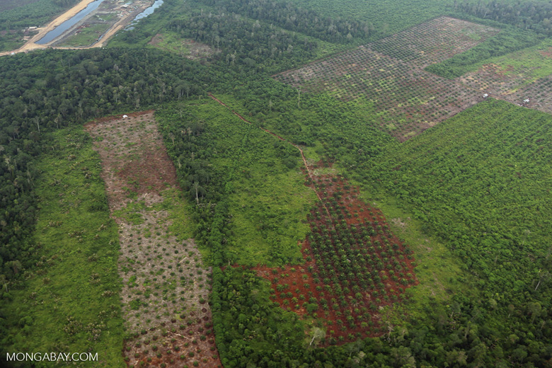 Deforestation in Riau [riau_1261]