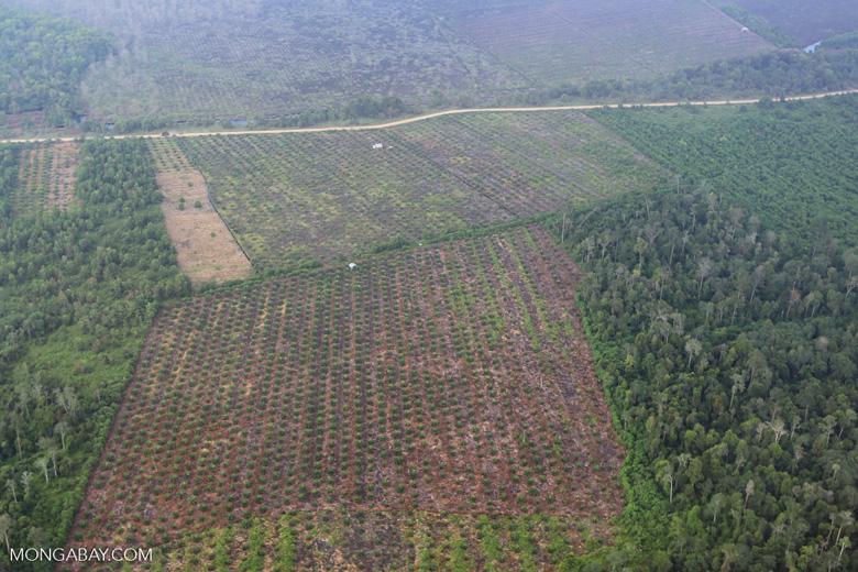 Deforestation in Riau [riau_1265]