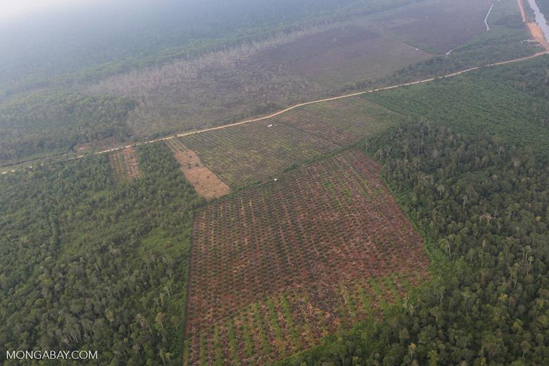 Deforestation in Riau [riau_1266]