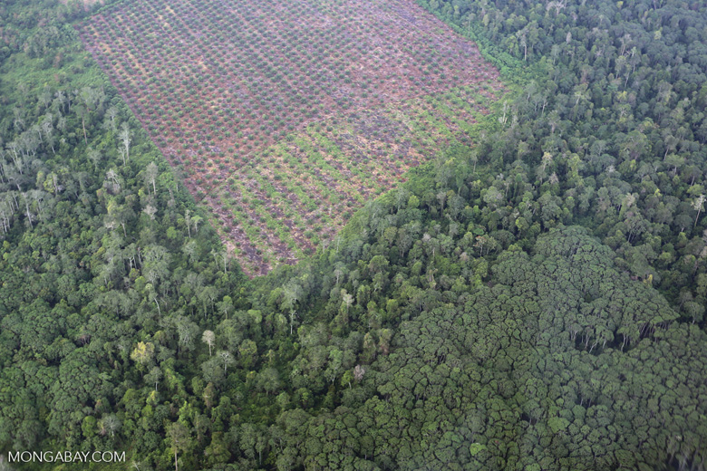 Clearing of peat forest and community jungle rubber in Riau