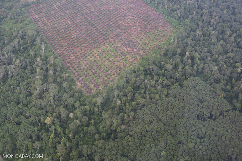Clearing of peat forest and community jungle rubber in Riau [riau_1268]
