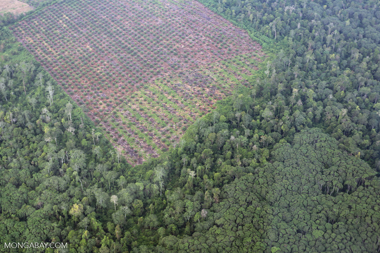 Clearing of peat forest and community jungle rubber in Riau [riau_1269]