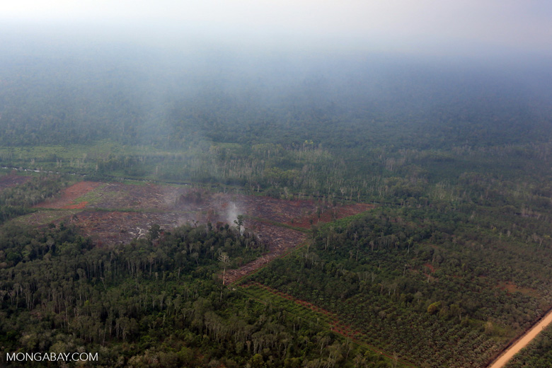 Peat forest being burned for a new oil palm plantation [riau_1270]