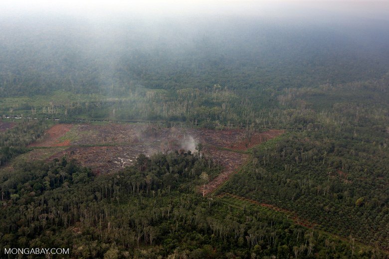 Peat forest being burned for a new oil palm plantation
