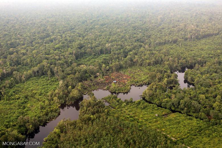 Deforestation in Riau [riau_1275]