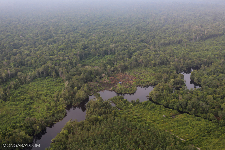 Deforestation in Riau [riau_1276]