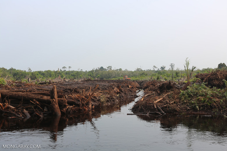 Drained and deforestated peatland [riau_1319]