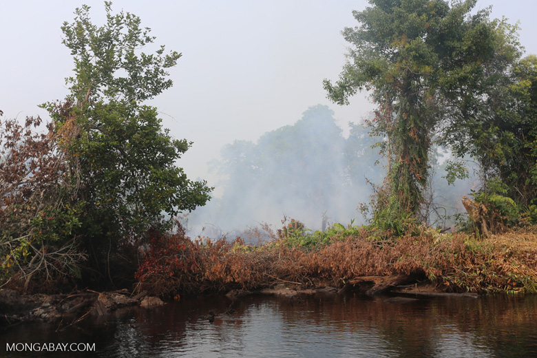 Agricultural fire set by smallholders [riau_1331]