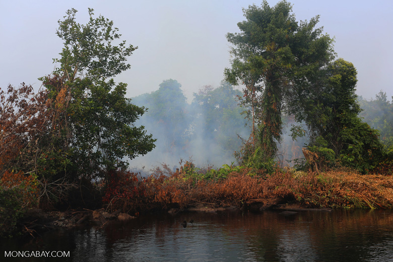 Agricultural fire set by smallholders [riau_1332]