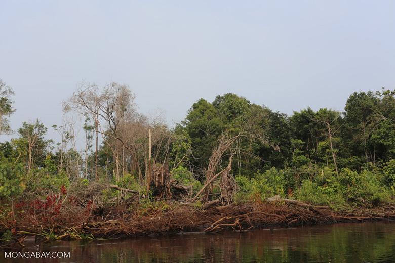 Smallholder deforestation