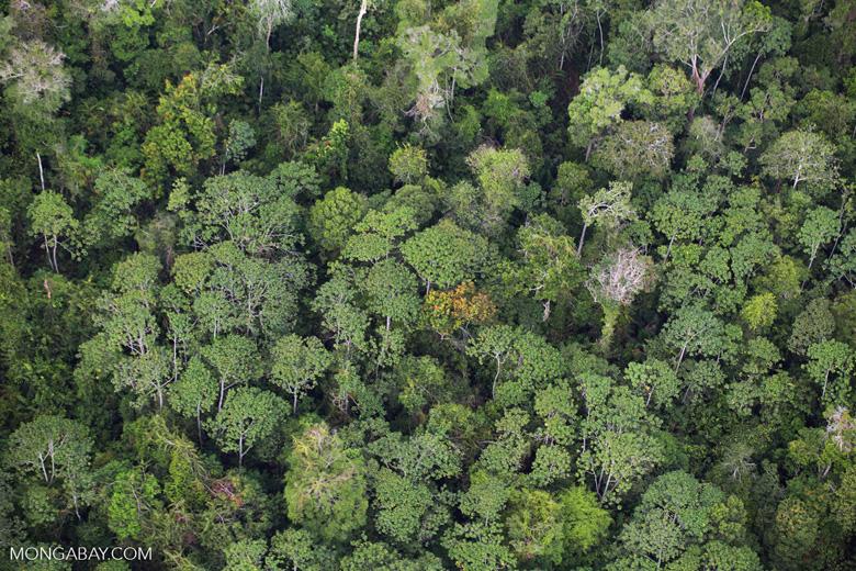 Riau rainforest [riau_1351]