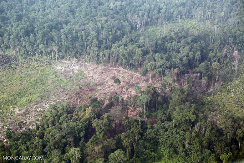 Deforestation in Sumatra [riau_1355]