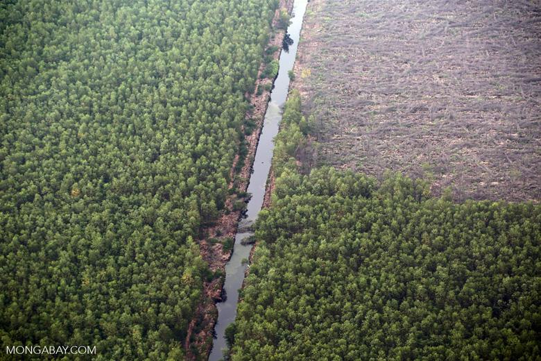 Acacia plantation [riau_1356]