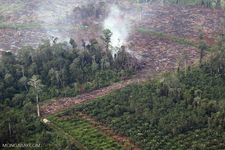 Peat fire in Sumatra