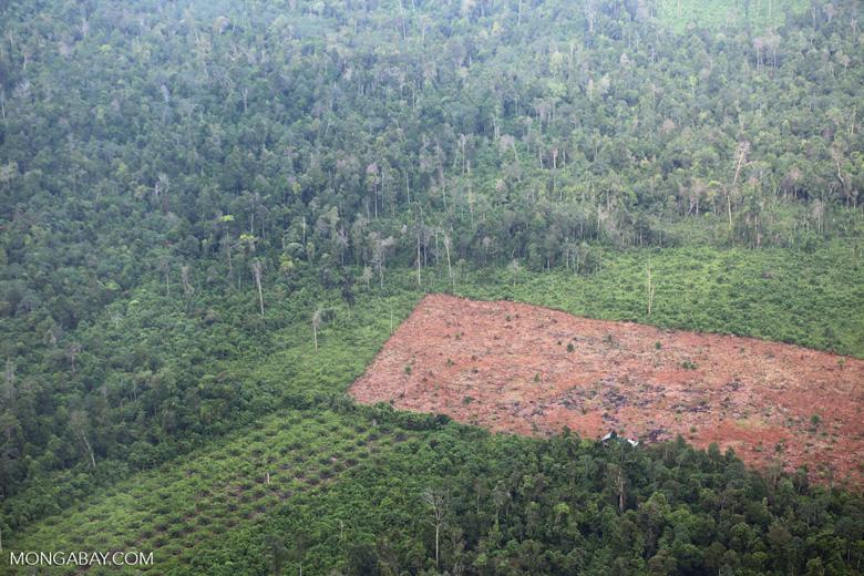 Deforestation in Sumatra [riau_1364]