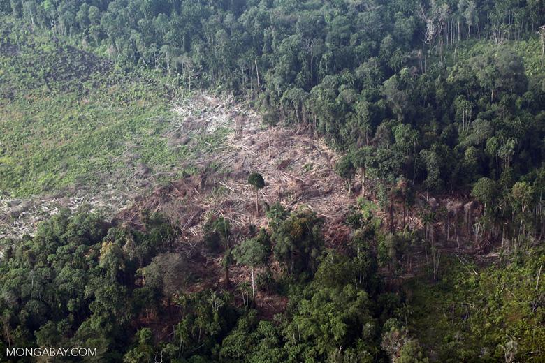 Deforestation in Sumatra [riau_1366]