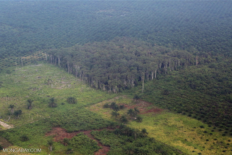 Deforestation in Sumatra [riau_1367]