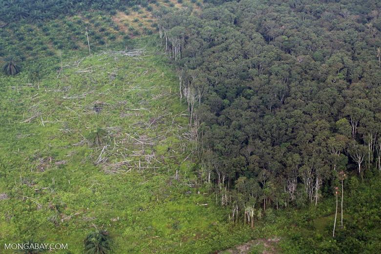 Deforestation in Sumatra [riau_1368]