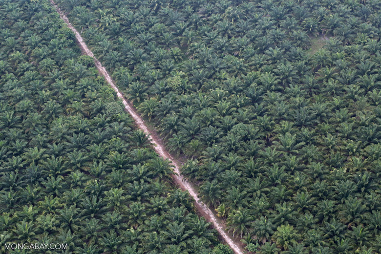 Oil palm plantation on peatland in Riau