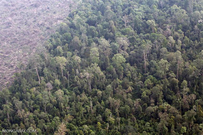 Deforestation in Sumatra [riau_1371]