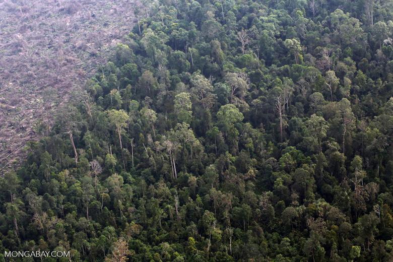 Deforestation in Sumatra [riau_1372]
