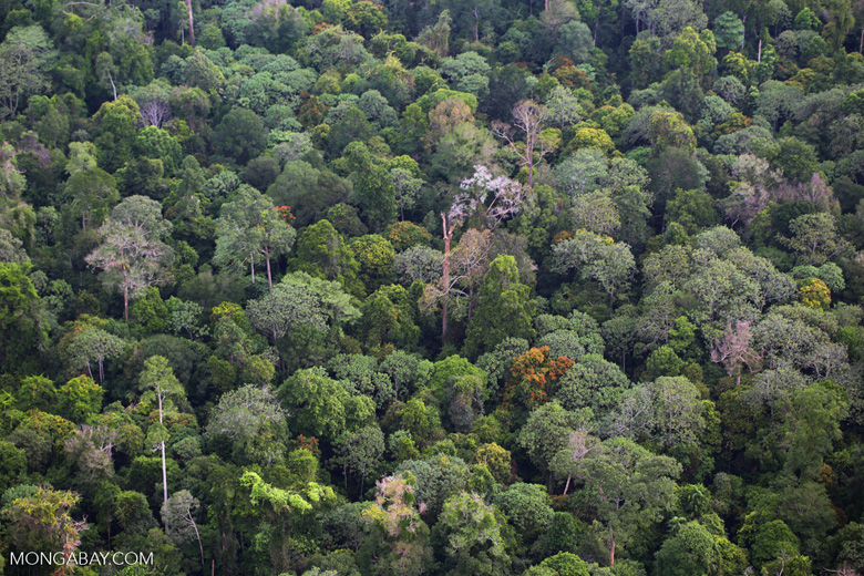 Sumatran rainforest [riau_1375]