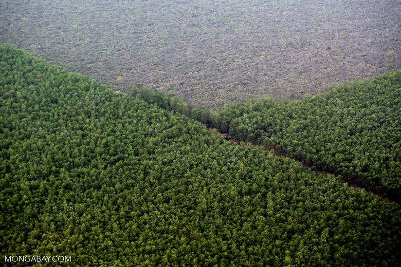Acacia plantation [riau_1379]